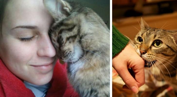 10 azioni con cui il gatto ci comunica il suo amore, senza che ce ne rendiamo conto