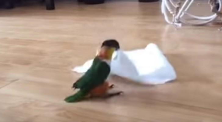 Sie gibt ihrem Papagei eine Serviette, aber sie konnte sich nicht vorstellen, was er damit macht!