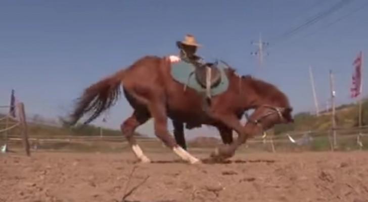 Il cavallo più pigro del mondo: se cercano di montarlo, avviene l'incredibile