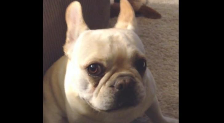 Elle demande à son chien comment s'est passé sa journée. Et il a BEAUCOUP de choses à dire!