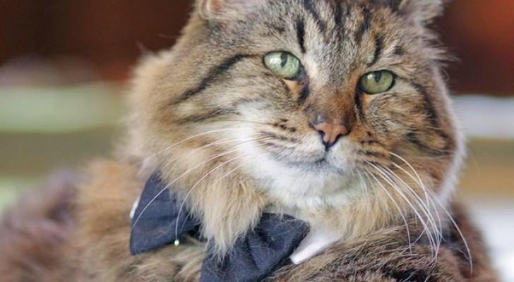 Dit is de oudste kat ter wereld: 121 jaar oud in kattenjaren!