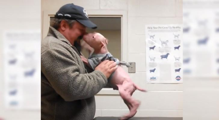Een pitbull ontmoet de man die zijn leven redde: zijn reactie ontroert zelfs de dierenarts