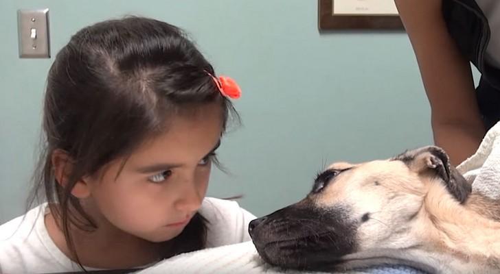 Ciò che è stato fatto a questo cane è assurdo, ma la sua trasformazione è impressionante!
