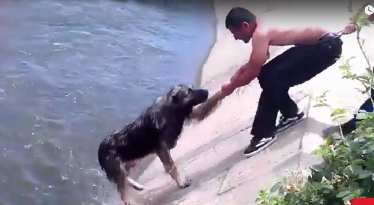 The top 10 most AMAZING dogs rescues of all time ... !
