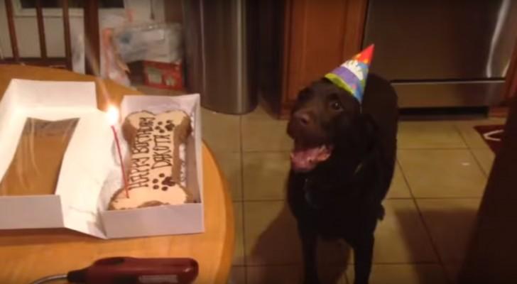 Esta es la reaccion incontrolable del perro a la vista de su torta ESPECIAL de cumpleaños