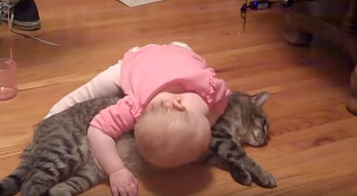 Het is ongelooflijk wat deze kat allemaal toelaat !