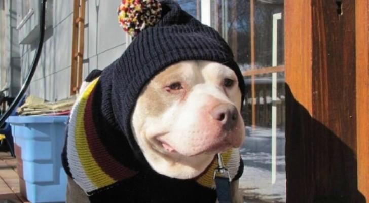 Una donna crea un ospizio per cani randagi per dare loro una vecchiaia dignitosa