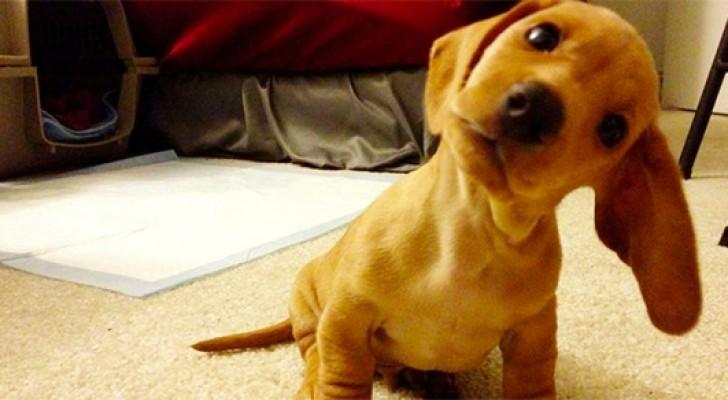 Il cane inclina la testa quando gli parli? Ecco cosa ti sta comunicando