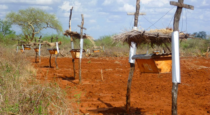 Afrikanische Bauern installieren Bienenkörbe entlang ihrer Felder, denn Elefanten mögen keinen Bienen