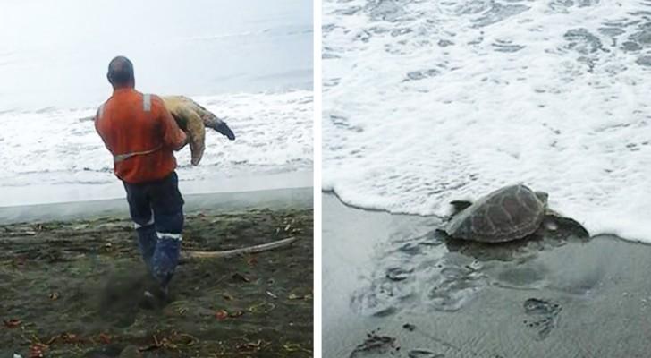Un uomo acquista 2 tartarughe marine dal mercato nero: ciò che farà merita un applauso