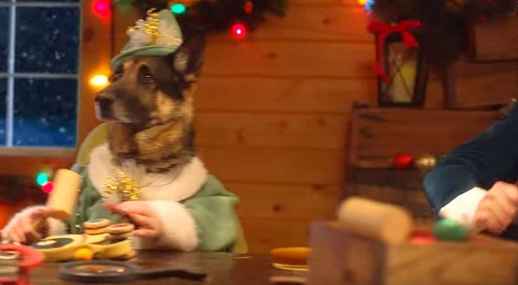 These furry friends show you the true Christmas spirit ... in their own way!