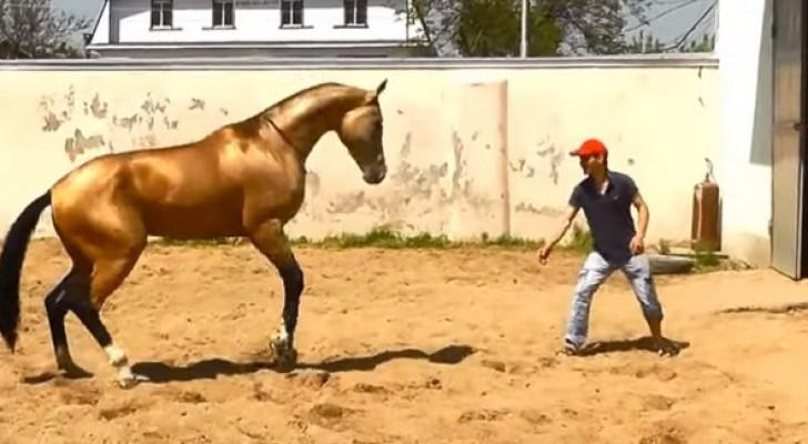 Veja o adestramento de um dos cavalos mais bonitos do mundo ...