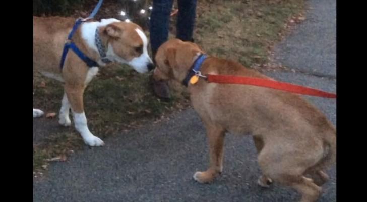 Eles foram adotados separadamente, mas quando se reencontram: veja a reação deles...