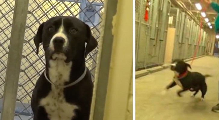 This dog has just been adopted ... This is his reaction when he gets out of the cage