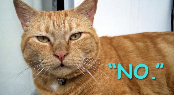 Les 6 choses que nous faisons et que notre chat DÉTESTE -même s'il ne peut pas nous le dire !
