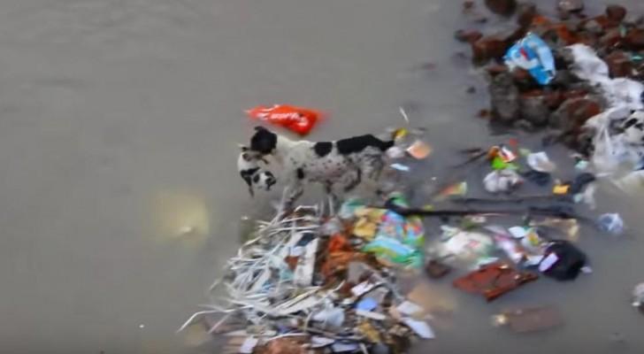 Ils voient un chien s'aventurer dans un fleuve: ce qu'il fait va vous émouvoir