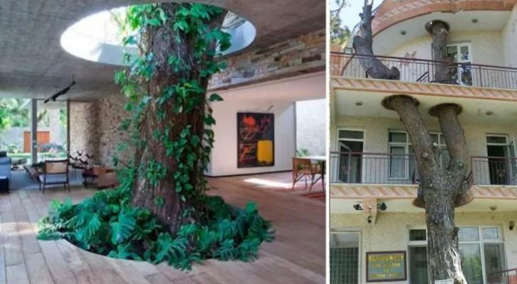 Deze 18 schitterende huizen zijn verwezenlijkt door op een speciale manier het leven te redden van de aangrenzende bomen