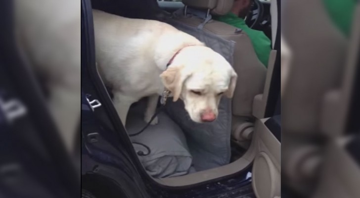 Un cane anziano non riesce a scendere dall'auto... Ma poi arriva un aiuto INASPETTATO