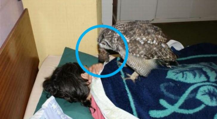 Il sauve un hibou blessé, mais il ne peut pas imaginer la façon dont l'animal décidera de le remercier