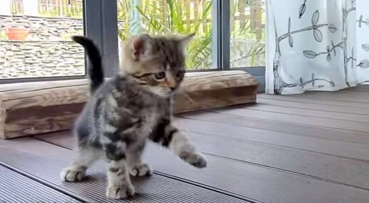 Due gattini si scontrano con la scopa... il risultato è adorabile!