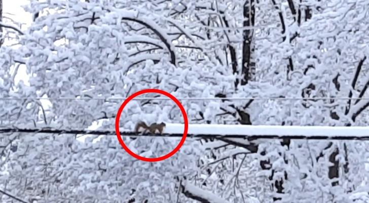 Si affaccia dalla finestra e vede uno scoiattolo: ciò che sta facendo è esilarante