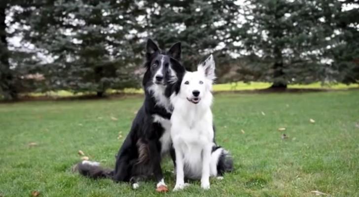 La joven esta por fotografiar a sus dos perros...Pero tengan en la mira aquel negro!