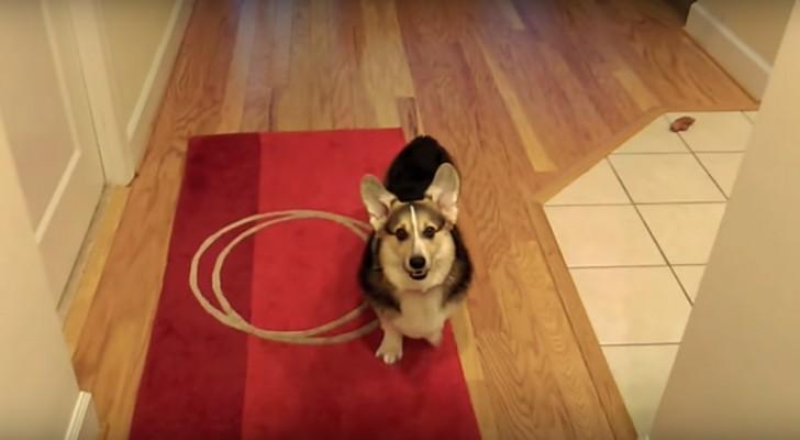 Zijn baasje doet net alsof hij moet niezen: kik hoe de pup zijn baasje te hulp schiet...
