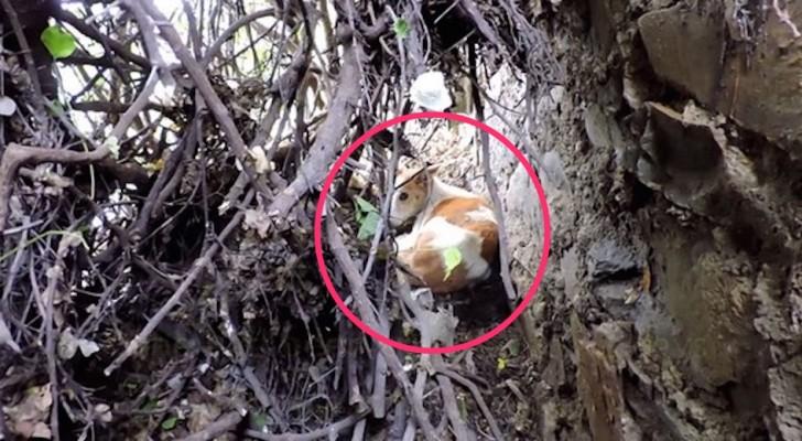 Il a été jeté dans la nature sans nourriture ni eau: voici son émouvant sauvetage