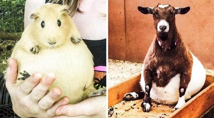 La gravidanza ti fa bella: i buffi pancioni di queste mamme animali vi faranno sorridere