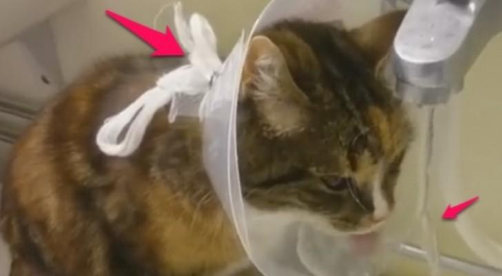 Un gattino è in convalescenza, ma riesce a trovare il lato POSITIVO. Che forza!