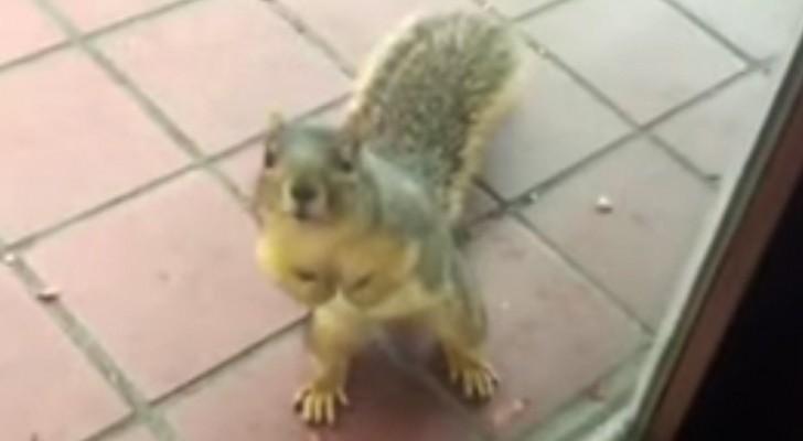Uno scoiattolo si avvicina alla finestra: ciò che accade poco dopo è delizioso