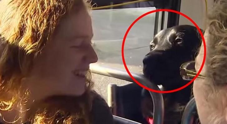 Deze hond stapt ELKE dag op de bus. Wat is zijn bestemming? Het park natuurlijk!