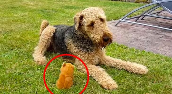 Ze hebben hun hond speelgoed dat kan praten cadeau gedaan: de gesprekken die hij hiermee voert zijn onbetaalbaar!