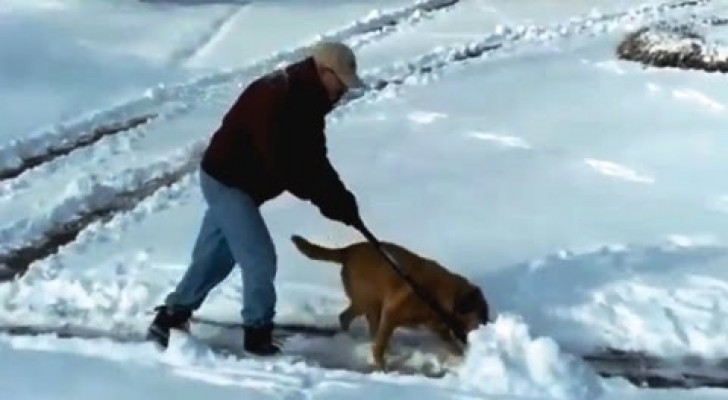 """People trying to clear snow!?..Yes, but look at who is """"helping""""! lol!"""