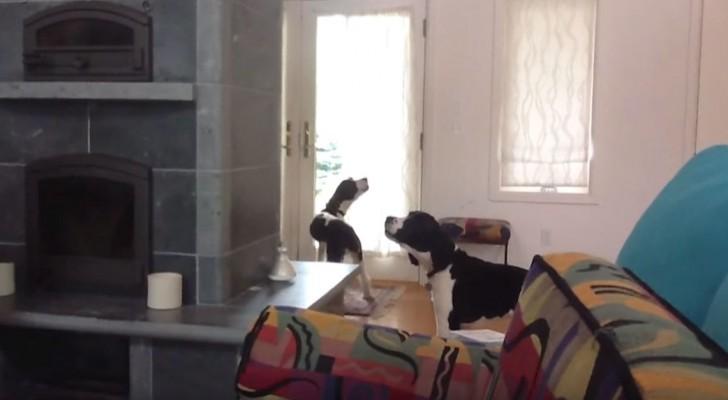 La loro padrona esce di casa... Ciò che fanno i suoi cani è commovente