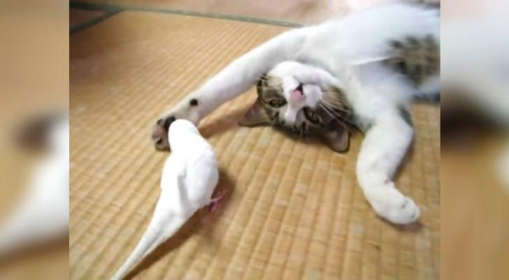 Une perruche s'approche d'un chat... Mais sa réaction n'est pas celle que vous attendez!