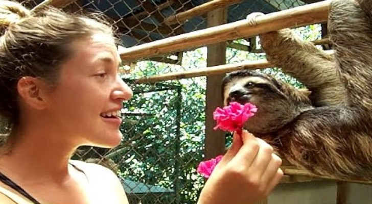 A girl approaches a sleeping sloth: Look at what it does a few seconds later ... Wow!