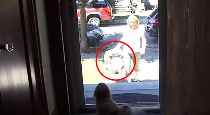 La maman rentre à la maison avec le nouveau membre de la famille... L'accueil du chien est adorable