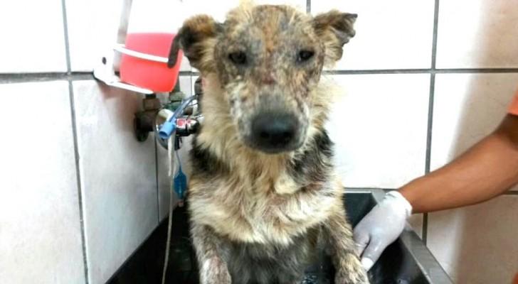 Deze hond werd verlaten omdat hij te lelijk was, maar een vrouw ontdekte zijn ware schoonheid... een hart van goud!