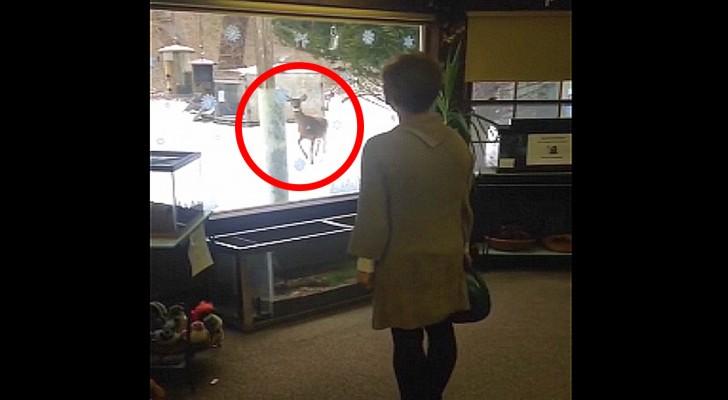 Een vrouw ziet een hert staan als ze uit het raam kijkt... wat het dier doet brengt een lach op je gezicht!