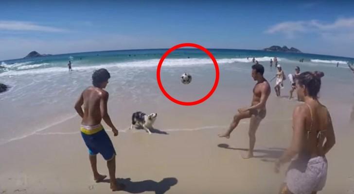 Stanno giocando a palla in spiaggia... ma quando arriva il turno del cane? Wow!