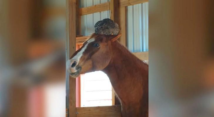 Il vérifie si son cheval va bien, il ne s'attendait pas à trouver ÇA sur sa tête!