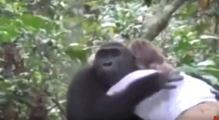 Ze ontmoeten elkaar weer na 12 jaar in het woud: deze ontmoeting brengt tranen in je ogen!