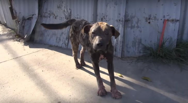 They found this dog in desperate condition on the side of the road: a month later she was unrecognizable!