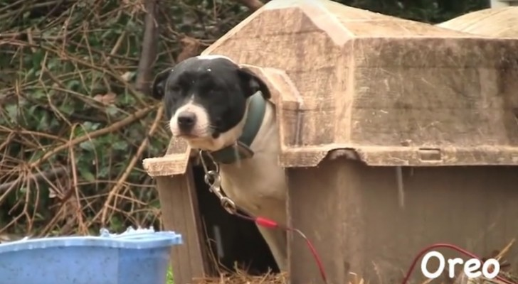 Provate a non commuovervi vedendo questi cani liberati dalle loro catene