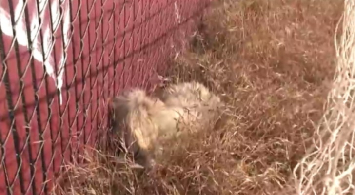 Terrified, he hid his head in the grass. But look what happens a little later ...