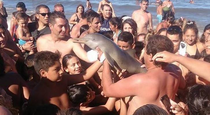 L'assurda fine del cucciolo di delfino, ucciso per scattare un selfie