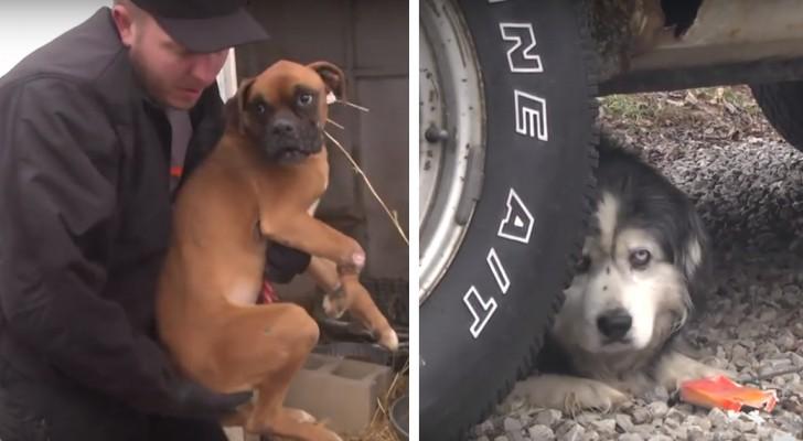 43 honden worden gered uit een illegale fokkerij... Dit zijn de aangrijpende beelden