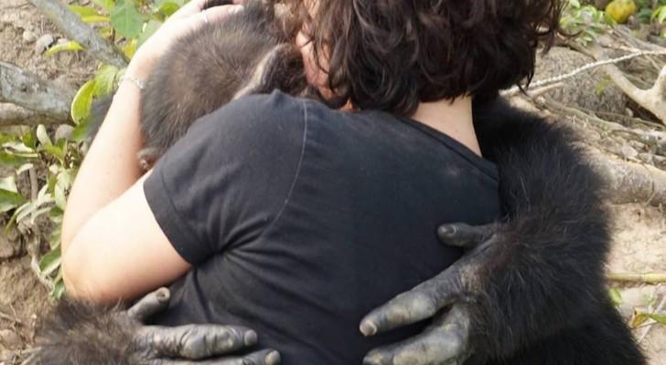 Van een laboratorium naar een onbewoond eiland: de emotionele redding van de eenzaamste chimpansee ter wereld