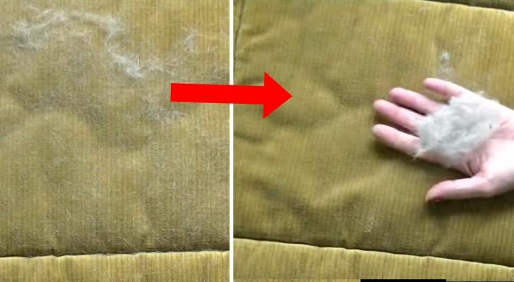 Retirer les poils des animaux du canapé? Voilà le meilleur moyen de le faire
